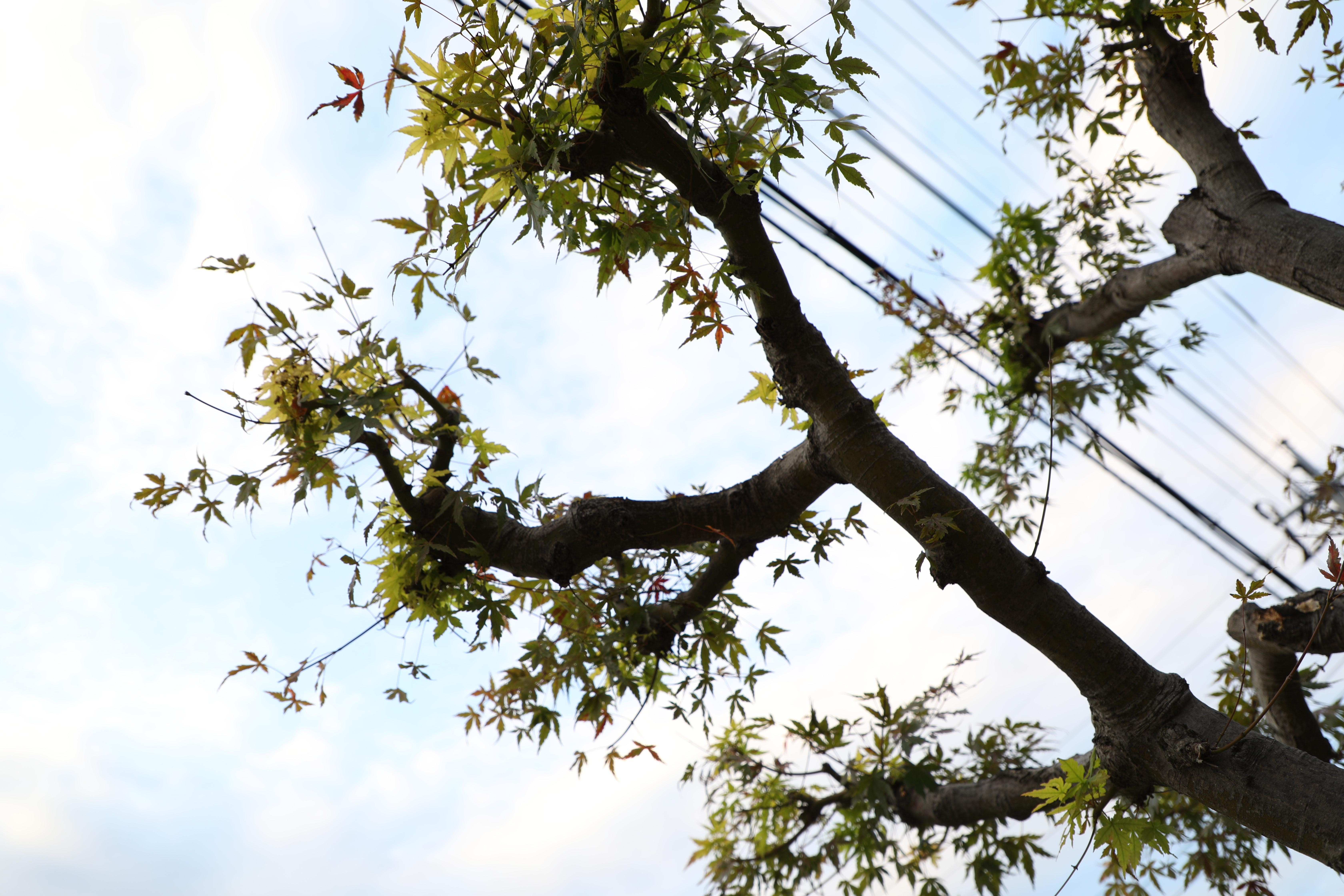 ca24mm葉と空